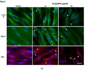 Mesenchymal Stem Cell Nanoparticles