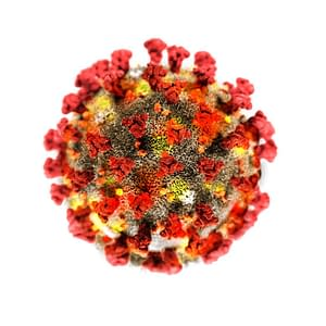Corona Virus - COVID-19